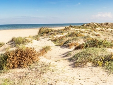 thumb_rabdeels-playa-500